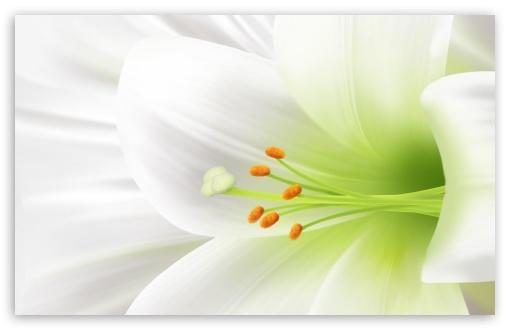 white_lily_easter_flower-t2.jpg